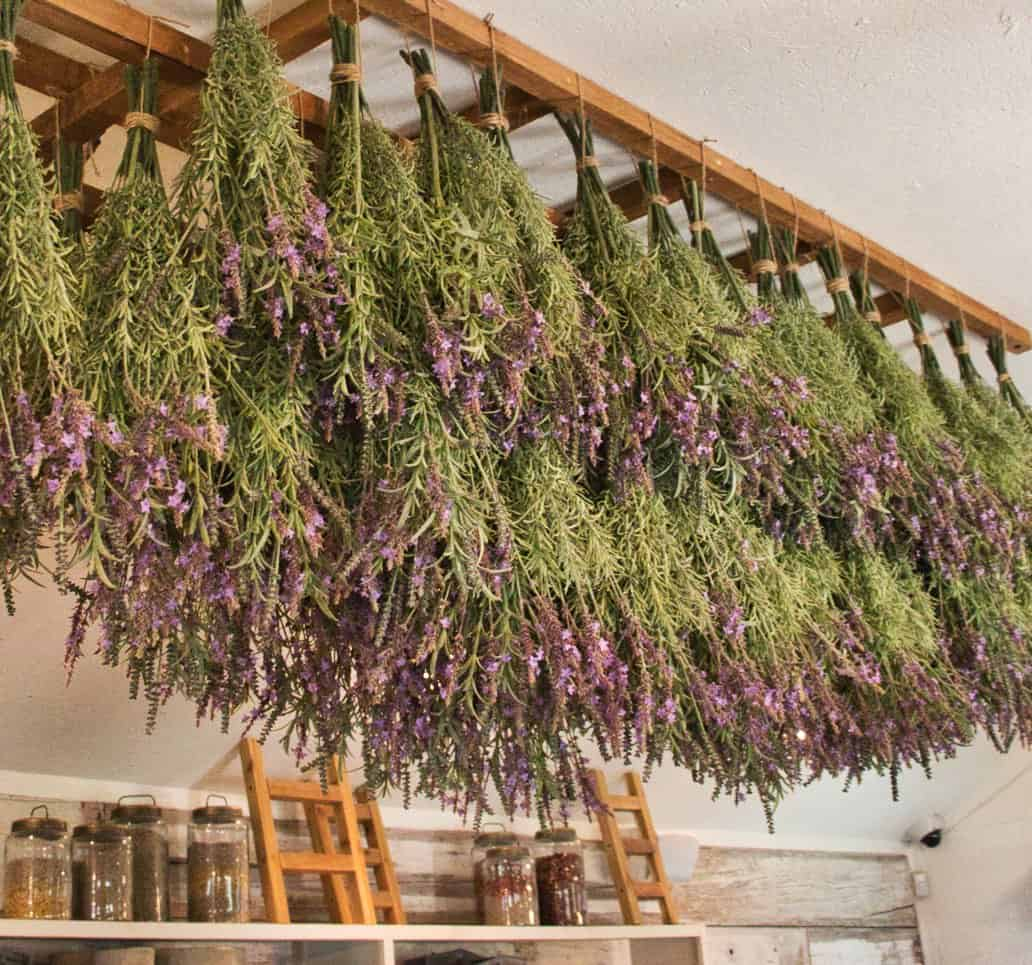 Dried lavender display in Magnolia Seed and Supply store in Waco, TX.