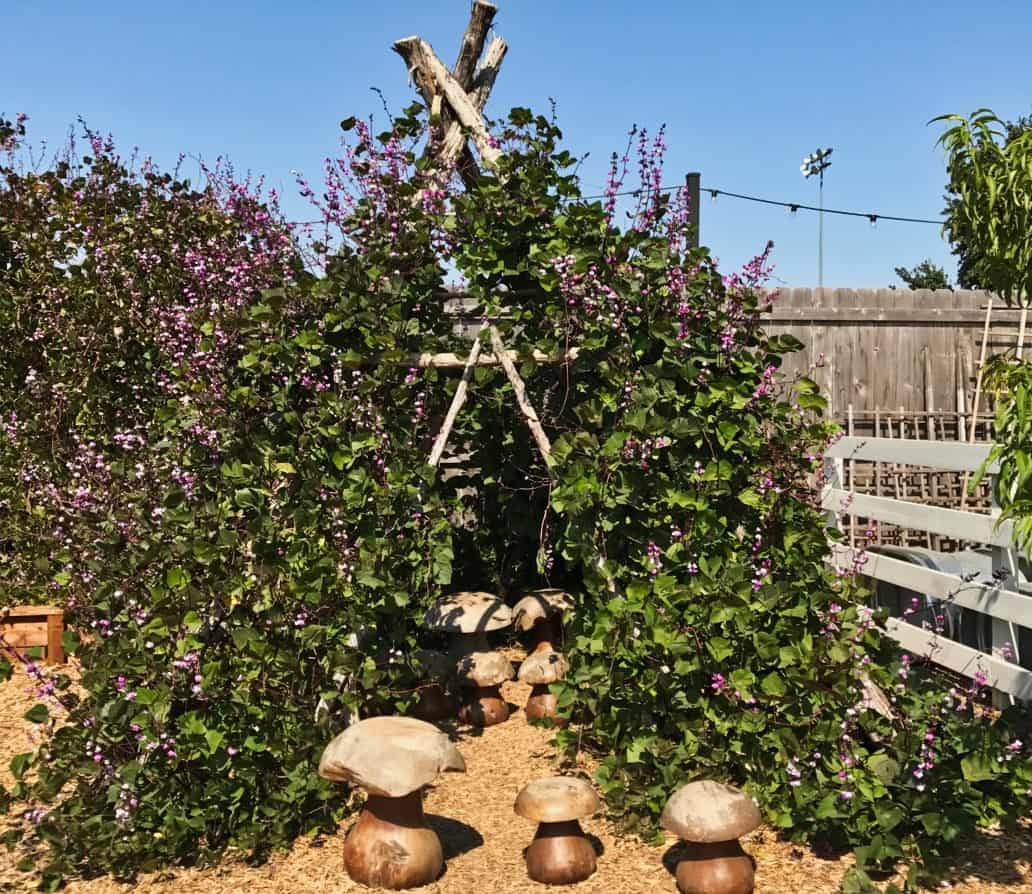 Teepee frame draped with vines and purple flowers in Magnolia Seed and supply gardens in Waco, TX.