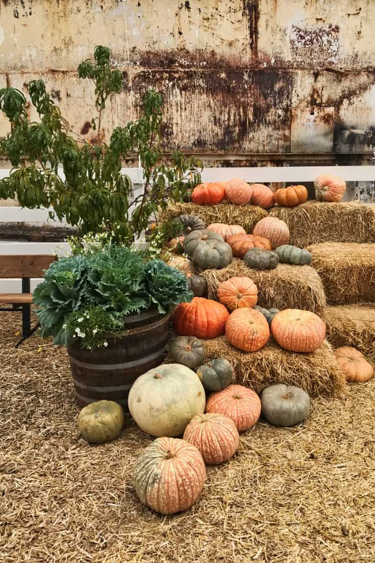 Perfect farmhouse color palette with white, black, brown, green and seasonal colors with pumpkins.